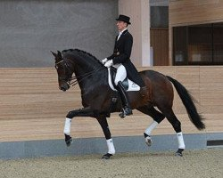 dressage horse Zack (Royal Warmblood Studbook of the Netherlands (KWPN), 2004, from Rousseau)