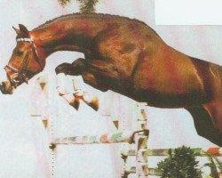horse Pius (Westphalian, 1989, from Pilot)