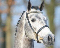 jumper Levisonn (Holsteiner, 2005, from Levisto Z)