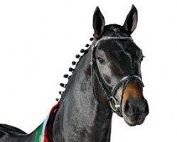 dressage horse Flanagan (Rhinelander, 2006, from Fidertanz)