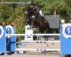 jumper Urte 7 (Holsteiner, 2004, from Casall Ask)