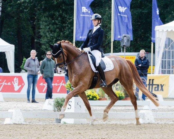 dressage horse Senor Charming (Westphalian, 2014, from Stanford)