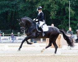 dressage horse Secret (German Sport Horse, 2014, from Sezuan)