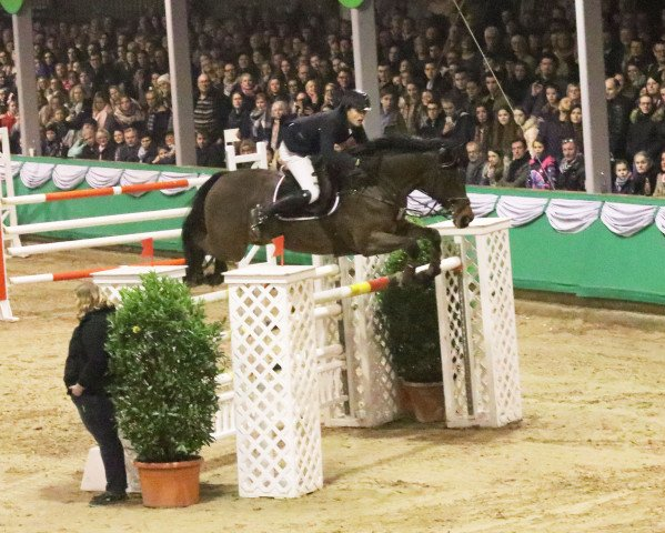 jumper Colarde E (Royal Warmblood Studbook of the Netherlands (KWPN), 2007, from Chacco-Blue)