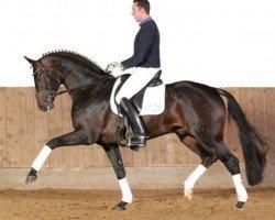 horse St. Moritz (Hanoverian, 2003, from Sandro Hit)