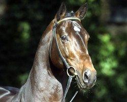 jumper Cordobes I (Holsteiner, 1995, from Contender)