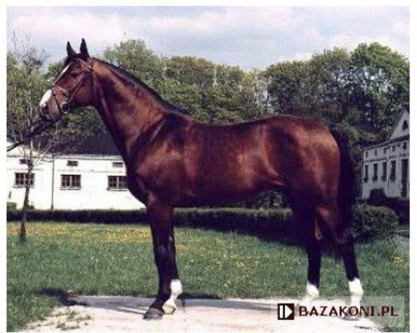 horse Barok (Little-Poland (malopolska), 1987, from Kwartet AA)