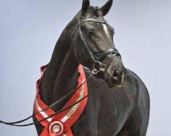 dressage horse Sezuan (Danish Warmblood, 2009, from Zack)