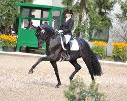 dressage horse Fürstenball (Oldenburg, 2006, from Fürst Heinrich)