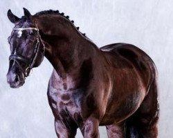 dressage horse Depardieu (Oldenburg, 1998, from De Niro)