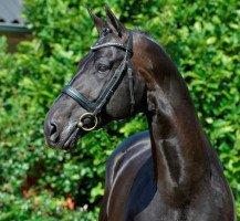 dressage horse Hotline (Hanoverian, 2003, from Hofrat)