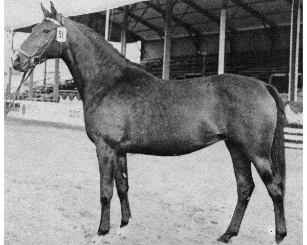 dressage horse Viktoria H 3128 (Holsteiner, 1961, from Cottage Son xx)