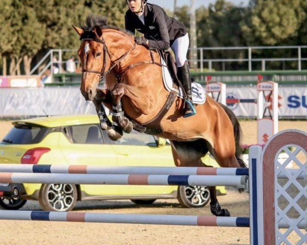 jumper Kastelle Memo (Belgian Warmblood, 2010, from Thunder van de Zuuthoeve)