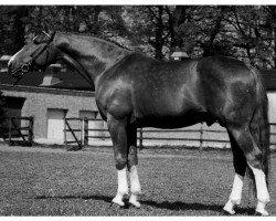 horse Figaro (Oldenburg, 1972, from Futuro)