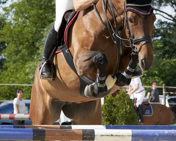 jumper Finlandina (Holsteiner, 2013, from Spartacus TN)