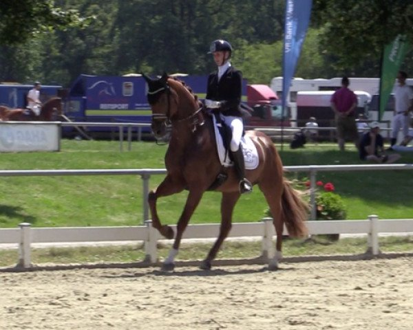 dressage horse Jetset 6 (Hanoverian, 2015, from Johnson)