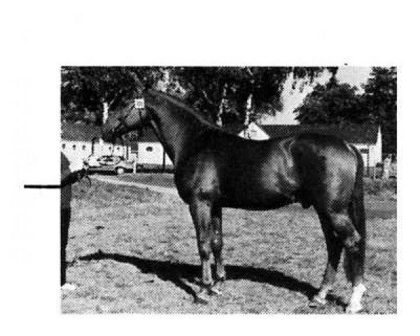 horse Geronimo (Hanoverian, 1973, from Gotthard)