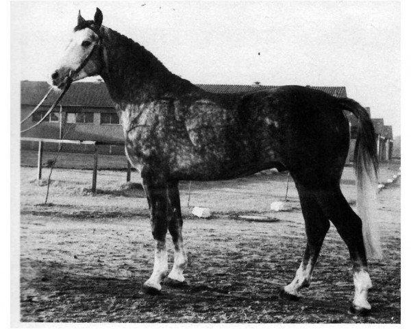 horse Wagner (Hanoverian, 1975, from Wendekreis)