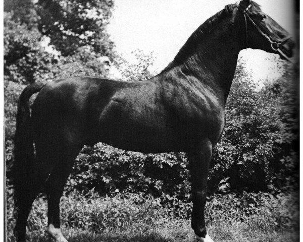 horse Wohlan (Hanoverian, 1955, from Frustra II)