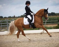 dressage horse Casino Royale K (German Riding Pony, 2005, from FS Champion de Luxe)