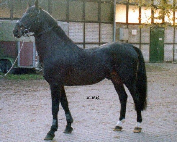 horse Rowdy (Westphalian, 1972, from Roderich)