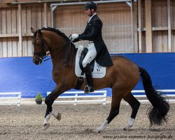 dressage horse Florenciano 6 (Royal Warmblood Studbook of the Netherlands (KWPN), 2004, from Florencio I)