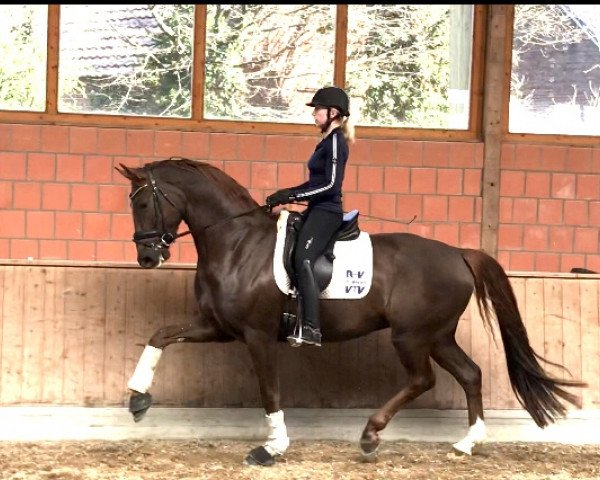 dressage horse For Magic Equesta (Hanoverian, 2015, from For Romance OLD)