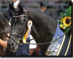 horse Fürst Heinrich (Westphalian, 1998, from Florestan I)
