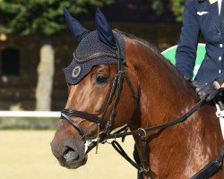 jumper Diathago (Royal Warmblood Studbook of the Netherlands (KWPN), 2011, from Diamant de Semilly)