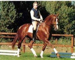 horse Interpol (Hanoverian, 1985, from Inschallah AA)
