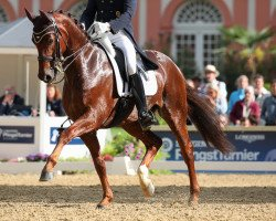 dressage horse Damons Davian (Westphalian, 2011, from Damon Hill 4)