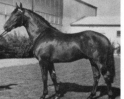 horse Albrant 3836 (Holsteiner, 1962, from Aldato)