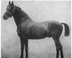 horse Achill 1265 (Holsteiner, 1877, from Herkules 1163)