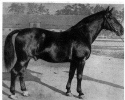 horse Flotow (Hanoverian, 1925, from Flavius)