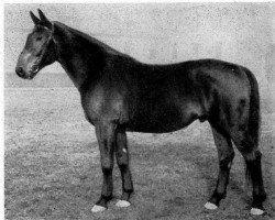 horse Jagdflug (Hanoverian, 1942, from Journalist)