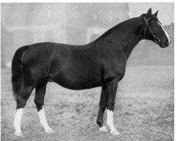 horse Schorse II (Hanoverian, 1923, from Schwof I)