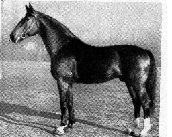 horse Dolling (Hanoverian, 1938, from Dolman)