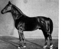 horse Alparis (Mecklenburg, 1925, from Ahrimann)