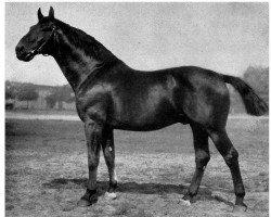 horse Flint (Hanoverian, 1915, from Flingarth)