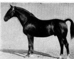 horse Filmkoenig (Hanoverian, 1924, from Feiner Kerl)
