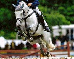 jumper Quite Capitol (Holsteiner, 1999, from Quidam de Revel)