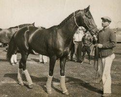 horse War Admiral xx (Thoroughbred, 1934, from Man o' War xx)