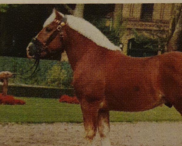dressage horse Nelson (Rhenish-German Cold-Blood, 1997, from Nando)