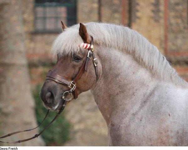 dressage horse Hurrican (Rhenish-German Cold-Blood, 1997, from Hoppeditz)