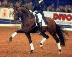 horse Krack C (Royal Warmblood Studbook of the Netherlands (KWPN), 1992, from Flemmingh)