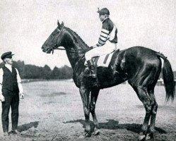 horse Man o' War xx (Thoroughbred, 1917, from Fair Play xx)