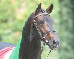 horse Arpeggio (Westphalian, 1995, from Acord II)