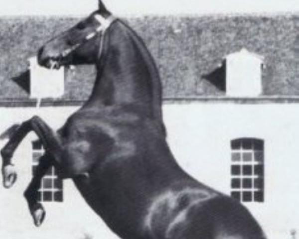 horse Furioso xx (Thoroughbred, 1939, from Precipitation xx)