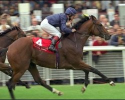 horse King Of Kings xx (Thoroughbred, 1995, from Sadler's Wells xx)