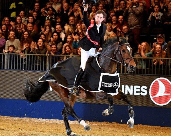 jumper Hello Vincent (Zangersheide riding horse, 2009, from Consul de la Vie Z)